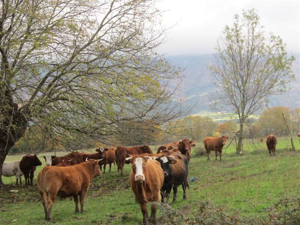 2012-05 9367-vaches