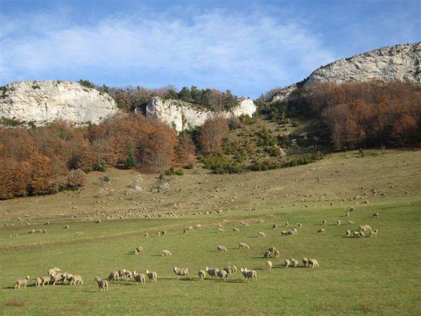 2012-05 9526-bacchus-moutons