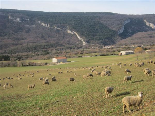 2012-06 0523-moutons