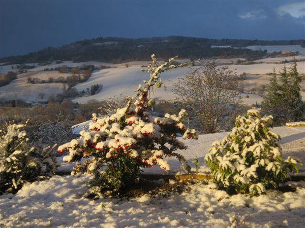 2013-02-1410-plante-neige.JPG