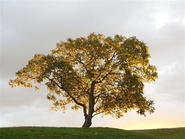 DSCN0086-arbre.jpg
