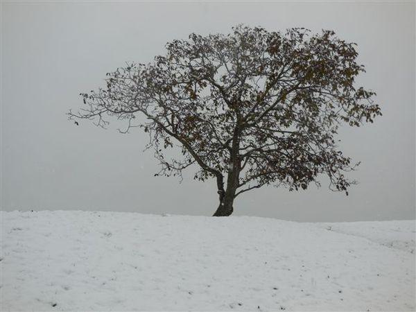 DSCN0446-arbre