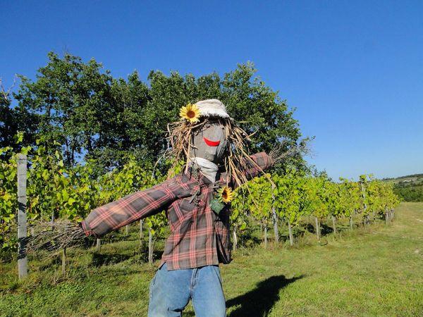 11-8-11-la-vigneronne.jpg