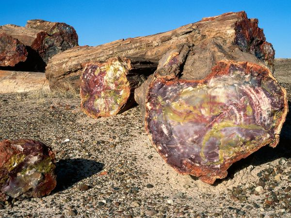 petrified_forest_national_parks---globeimages.jpg