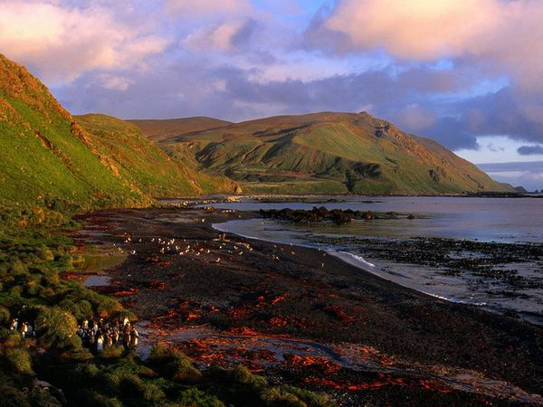 Sandy-Bay-Macquarie-Island-antartica-.fanpop.com