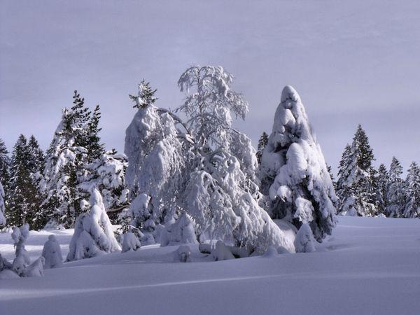 ski fond 15