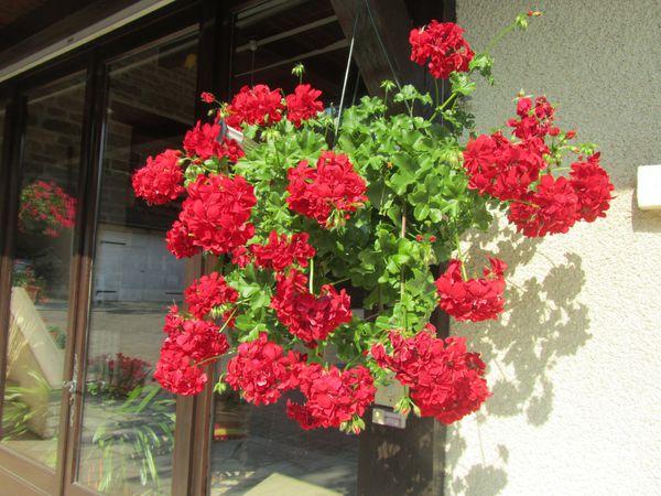 25.06.14 fleurs lingey 006