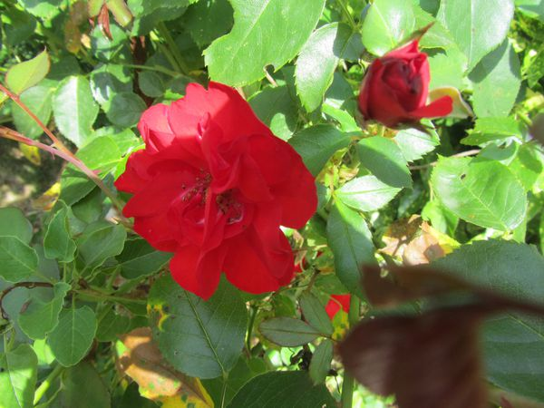 01.08.14-fleurs-mth 7263