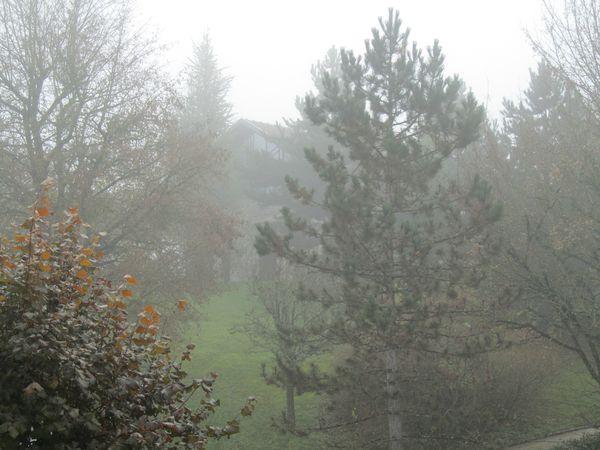 1.12.2013 brouillard 002