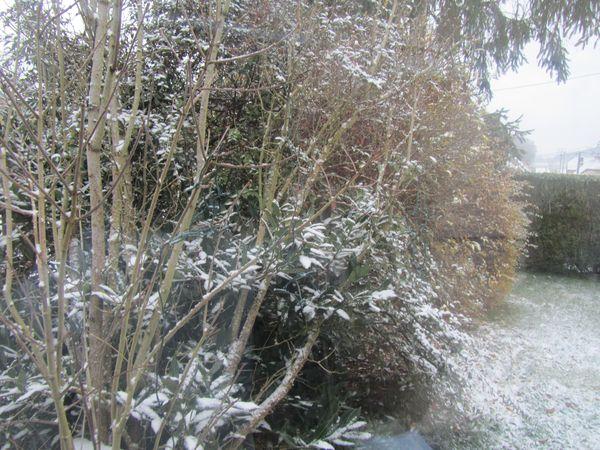 3.12.12 première neige 002
