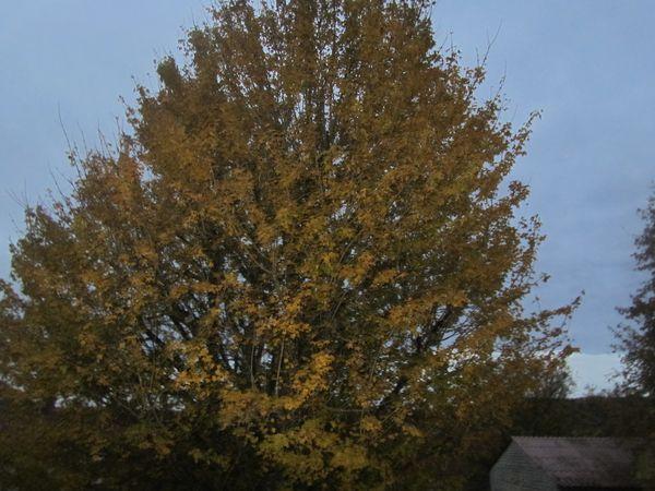 140.11.12 paysages d'automne 019