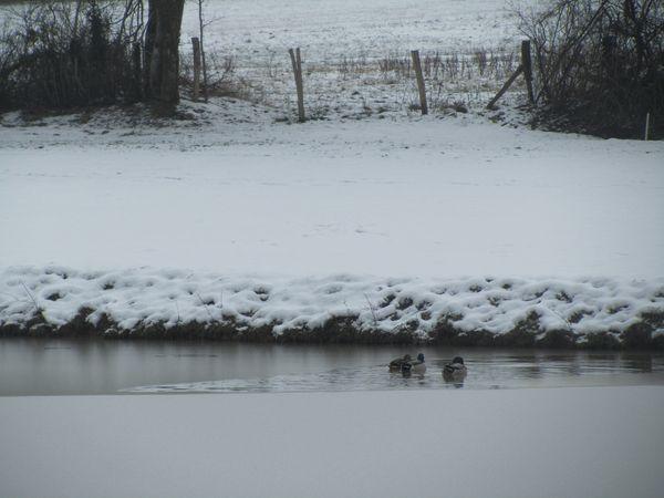 17.01.2013 golf sous la neige 053