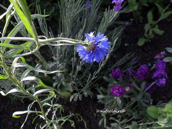 bleu 7