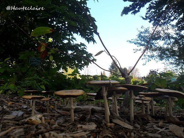 champignons-d-automne.jpg