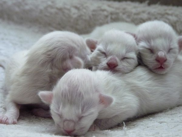 1-day old kittens