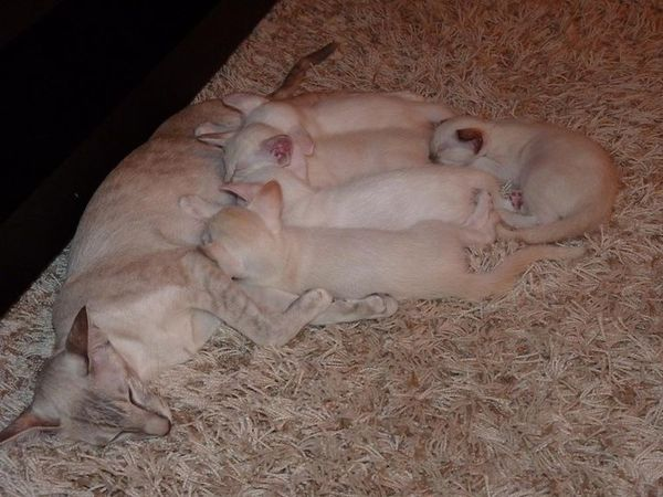 Kiddy-and-her-first-litter.jpg