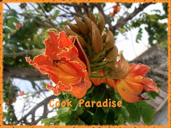 logo cook paradise.001