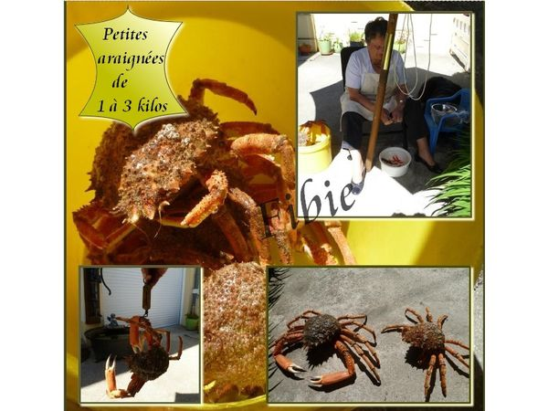 crabes.jpg