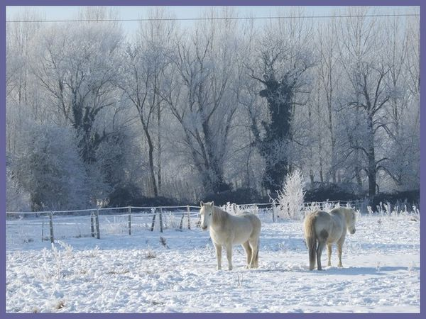 grand froid 2012 (17)