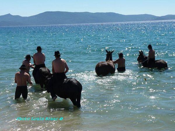 11-sept--19--des-mules-.et-des-hommes.JPG