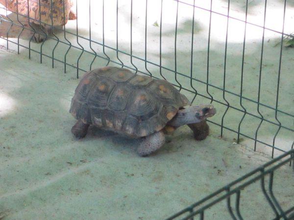fete-des-tortues-a-Sommieres-290613-012.jpg