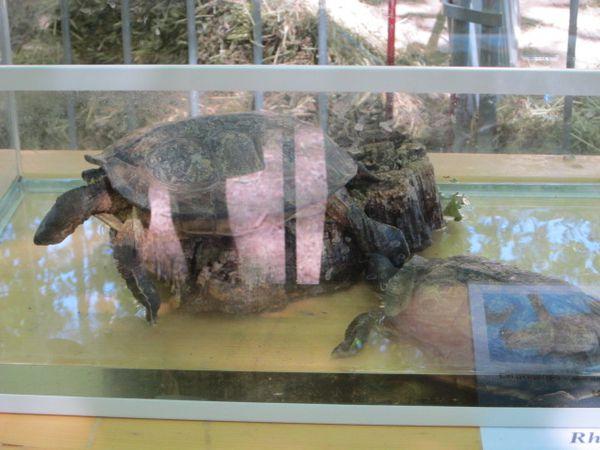 fete-des-tortues-a-Sommieres-290613-083.jpg