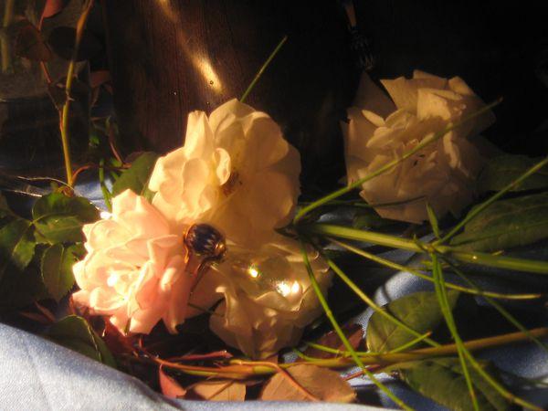compo-florales 4845