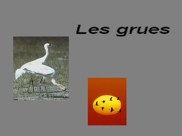 grues