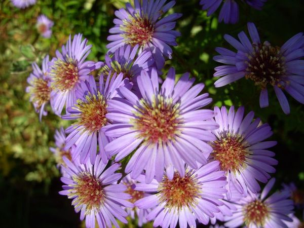 a asters 2