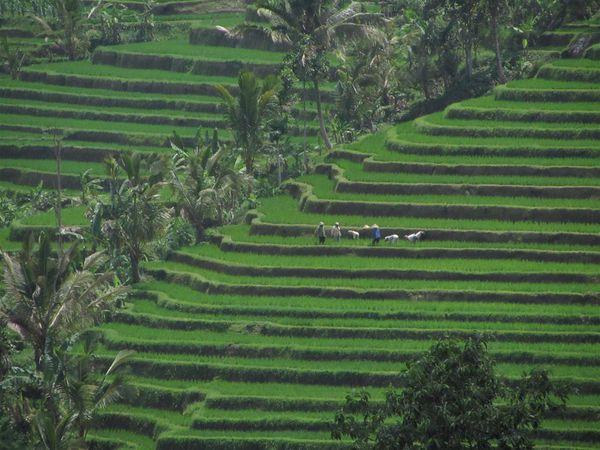 2011 09 14 28 Java Bali 299 (Large)
