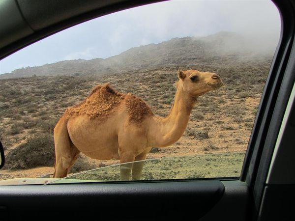 2012-03-Oman 0075 (Large)