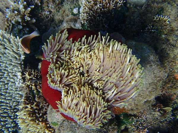 2013 07 28 Madagascar diving 118 (Large)