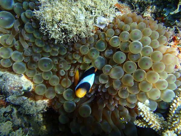 2013 07 28 Madagascar diving 127 (Large)