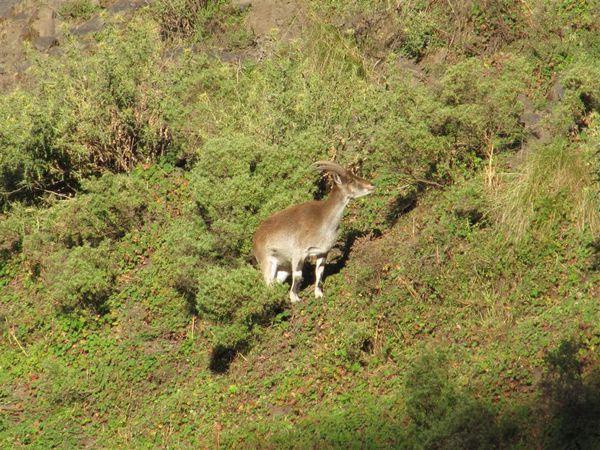 2009 12 26 Ethiopie 162 (Large)