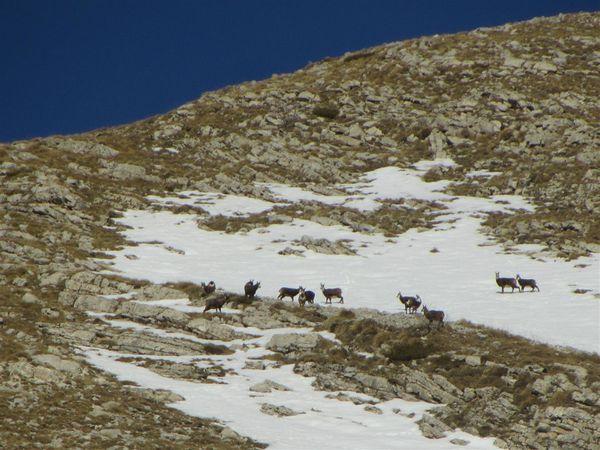 Ski-de-rando-2015-1 6697 (Large)