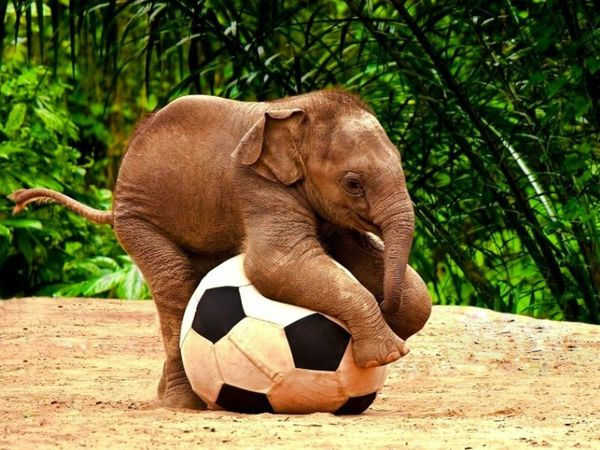 animals-wildlife-elephants-baby-elephant-christmas-globes-f.jpg
