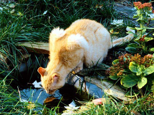 fond-ecran-animaux-chats-313.jpg