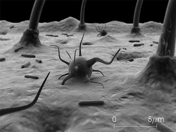A nameless bacteria, cilia and germs in a microscopic lands