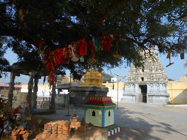 Inde-du-Sud-Janvier-Fevrier-2014-444.JPG