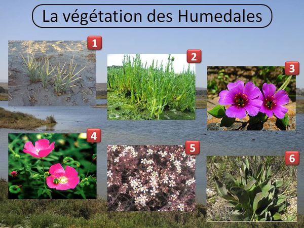 La végétation des Humedales