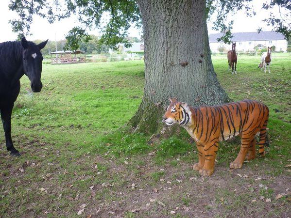 tigre chapp d 39 un cirque pr aux animaux et statues en r sine de nlc d co. Black Bedroom Furniture Sets. Home Design Ideas