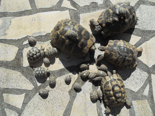 bain tortue terrestre