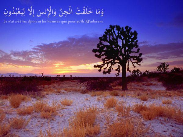 fond islam (113)