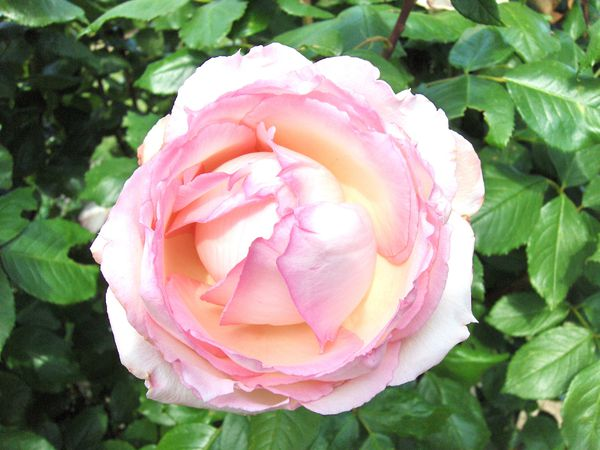 25-juin-2010-023.JPG