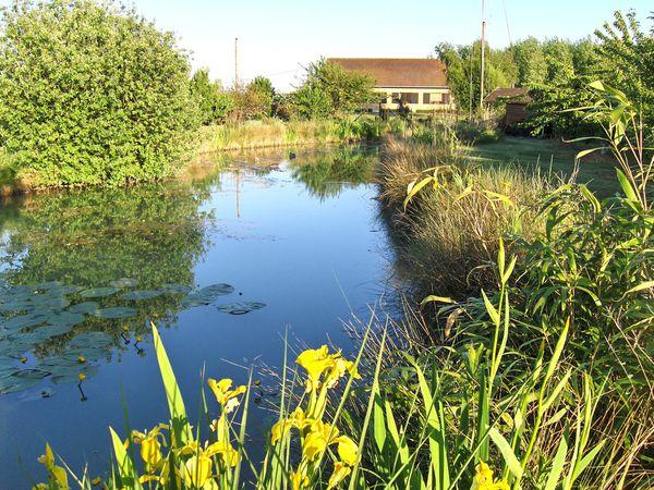 L etang au bord de l eau le soir f1rcx jardin for Article jardin