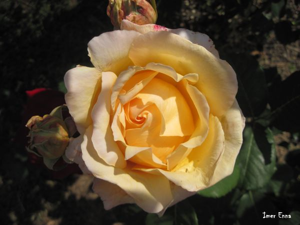 Fleurs-3883.JPG