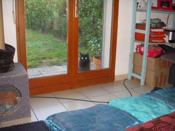 DSCN6936-Vador-my-cat-by-Missflosochic.JPG