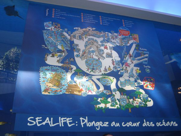 A val d 39 europe il y a aussi des requins aquarium sea for Piscine de val d europe