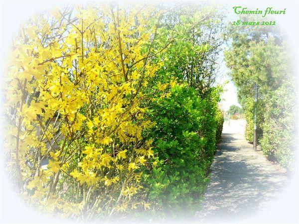 chemin-fleuri-1.jpg