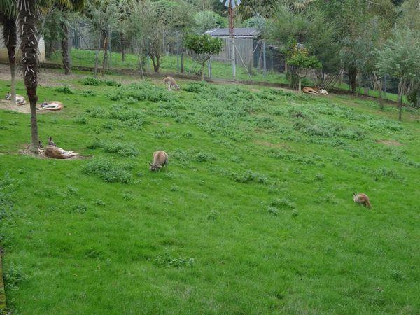 zoo asson 014